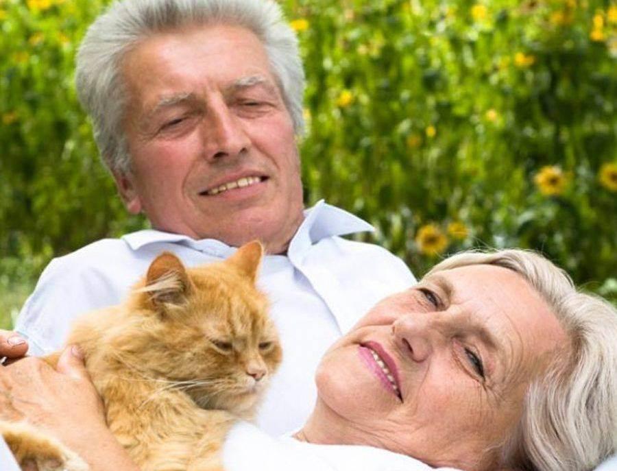 Чем полезны кошки?