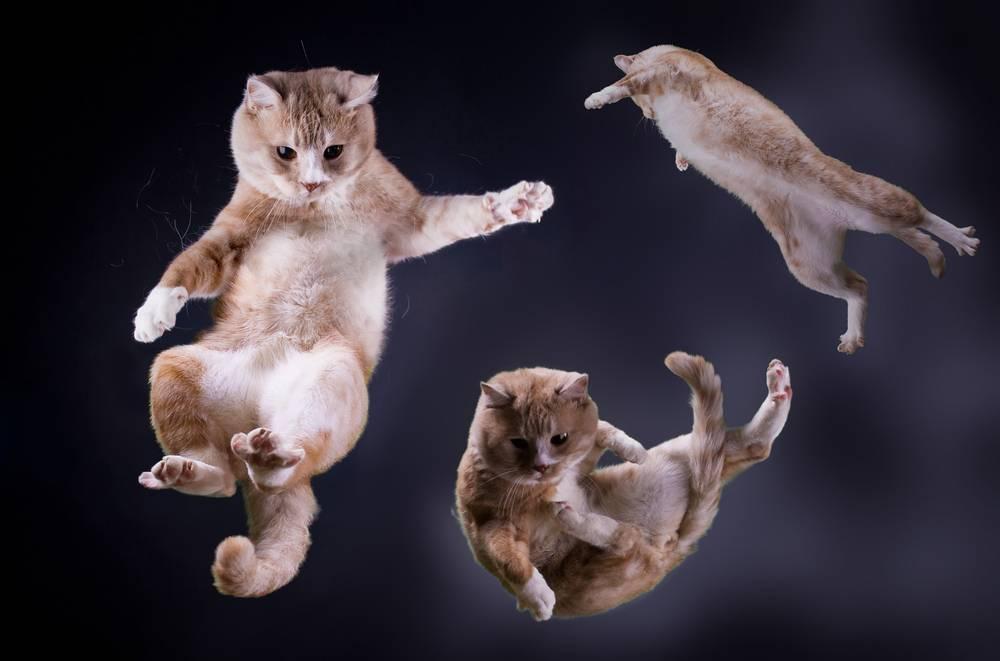 Почему кошка падает, припадает на лапы или заваливается набок? - симптомы, лечение, препараты, причины появления | наши лучшие друзья