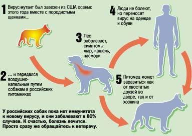 Признаки бешенства у кошек и котят, симптомы, профилактика