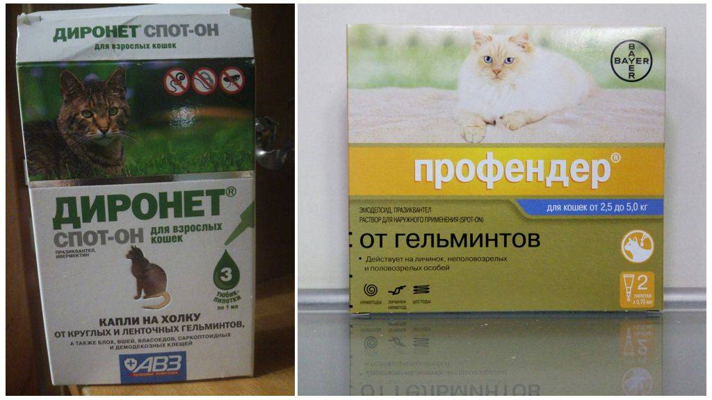 Как и чем вывести глистов у кошки в домашних условиях?