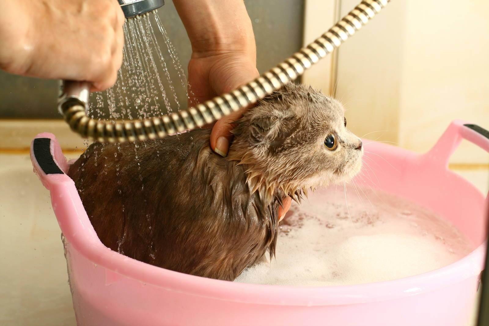 Как ухаживать за котенком в домашних условиях, когда и как купать его в первый раз?