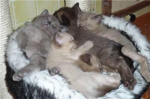Примеры чем можно кормить кошек после родов и чтобы было больше молока