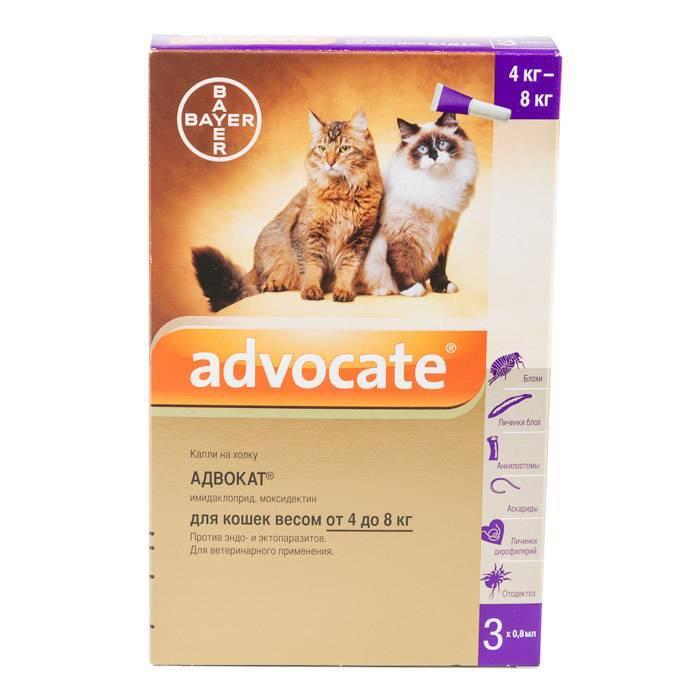 Капли адвокат для кошек — инструкция к применению при борьбе со блохами