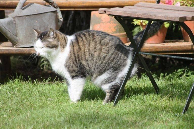 Как отучить кота метить территорию: народные средства