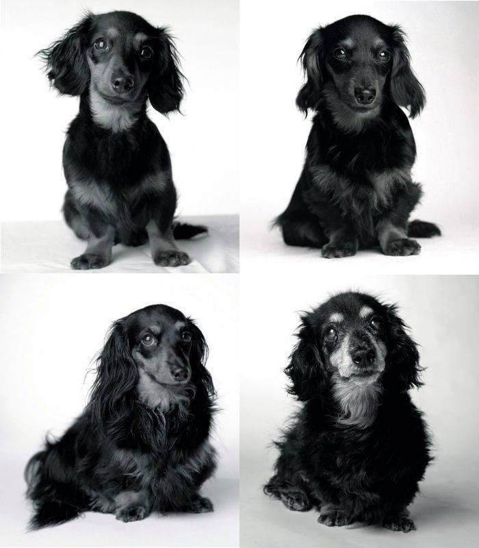 Сколько лет живут собаки в среднем   в домашних условиях, уличные