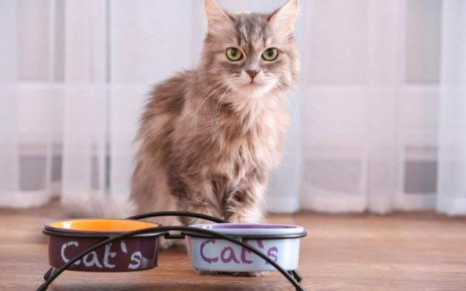 8 причин, почему кот или кошка перестали ходить в лоток и что с этим делать