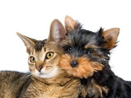 Пироплазмоз у собак: симптомы и лечение