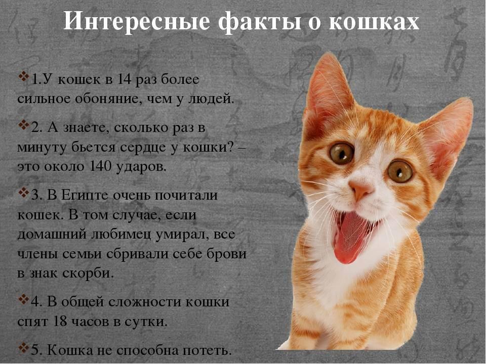 Все самое интересное о кошках: удивительные факты о наших усатых питомцах для детей и взрослых