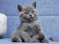 Все о воспитании и перевоспитании котов