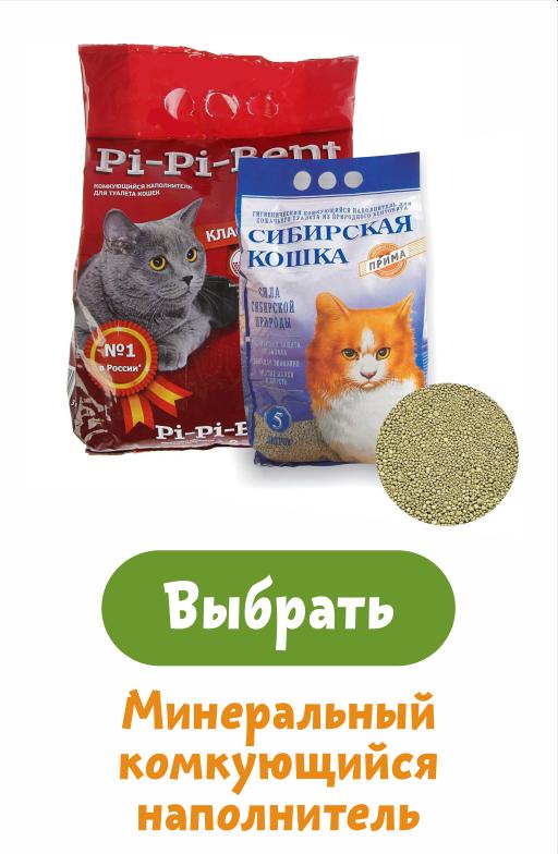 Подскажите как помочь коту?! - кот не может покакать - запись пользователя яна (jana85) в сообществе домашние животные - babyblog.ru