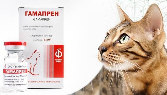 Фелиферон для кошек - инструкция по применению
