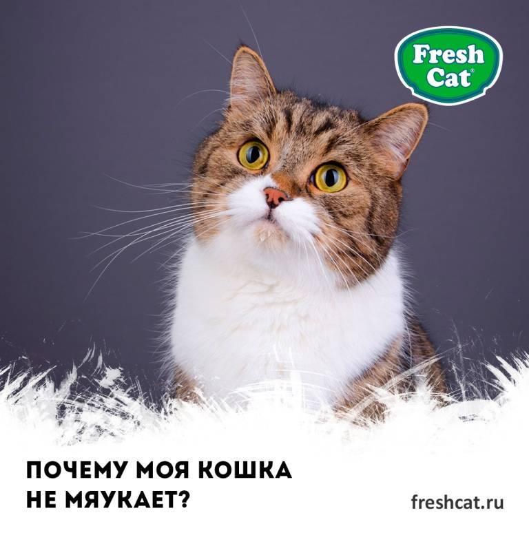 Почему кошка постоянно мяукает без причины? почему кошка постоянно мяукает без причины?