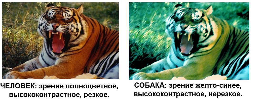 Какое зрение у кошек: черно-белое или цветное