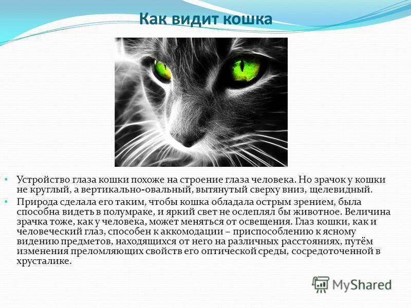 Кошачье зрение: как видит мир ваш кот ≪ scisne?