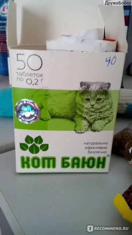 ᐉ что делать со слишком активной кошкой? - ➡ motildazoo.ru