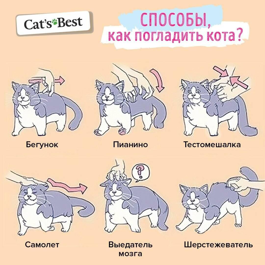 Зожник |   как правильно гладить кота?
