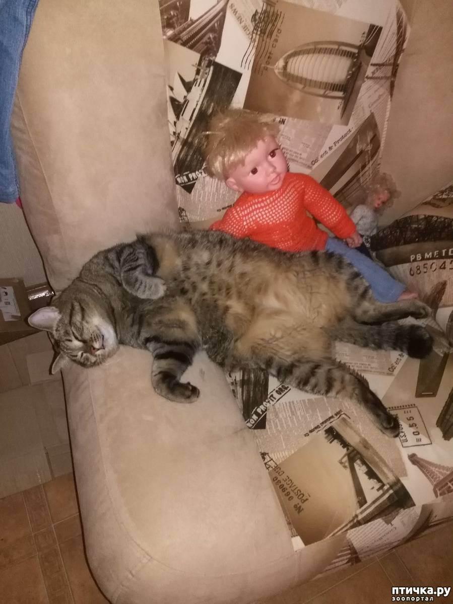 Как откормить худую кошку, чтобы набрала вес