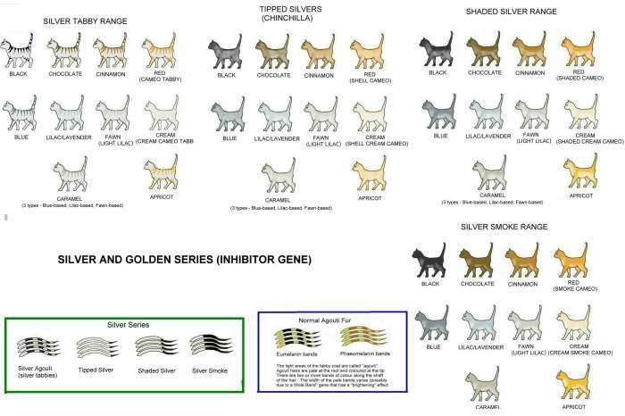 Окрасы кошек: от угольного до белоснежного