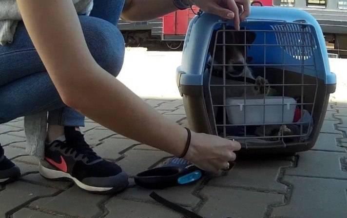 Перевозка животных в самолете: сложности, правила, советы