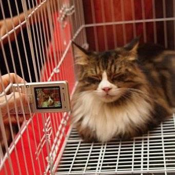 Все о выставках домусов (беспородных кошек)