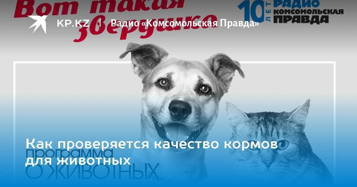 Роскачество назвало марки худшего корма для собак