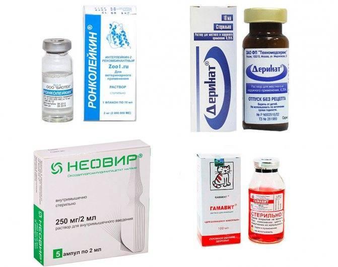 Лечение простуды у кошек: причины, симптомы, профилактика