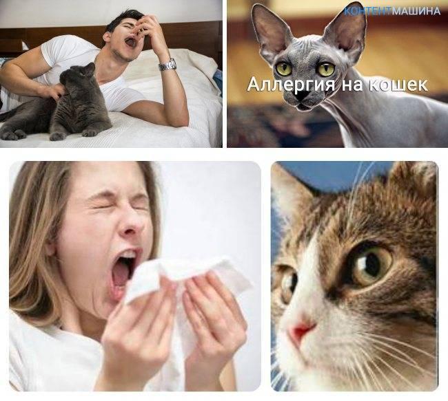 Аллергия на кошек как избавиться медикаментозными и народными средствами