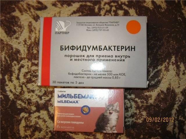 Как давать бифидумбактерин коту