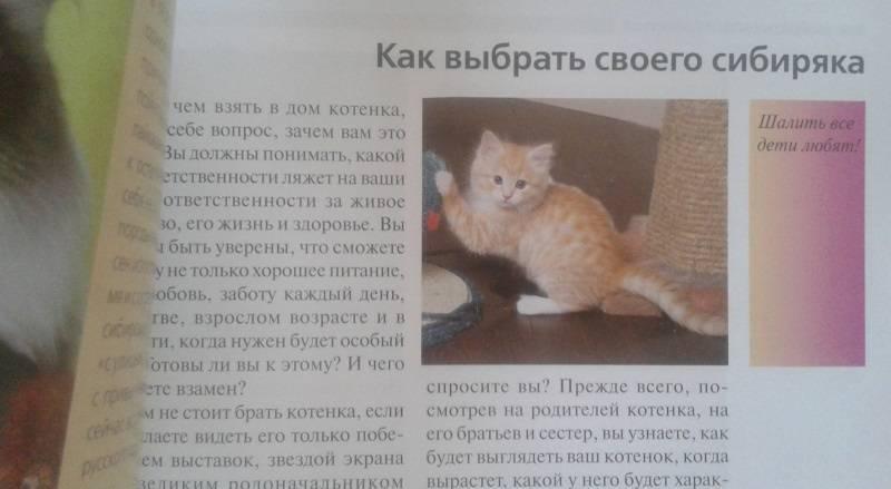 Как в домашних условиях определить, сколько котенку недель или месяцев, до какого возраста кошка не считается взрослой?