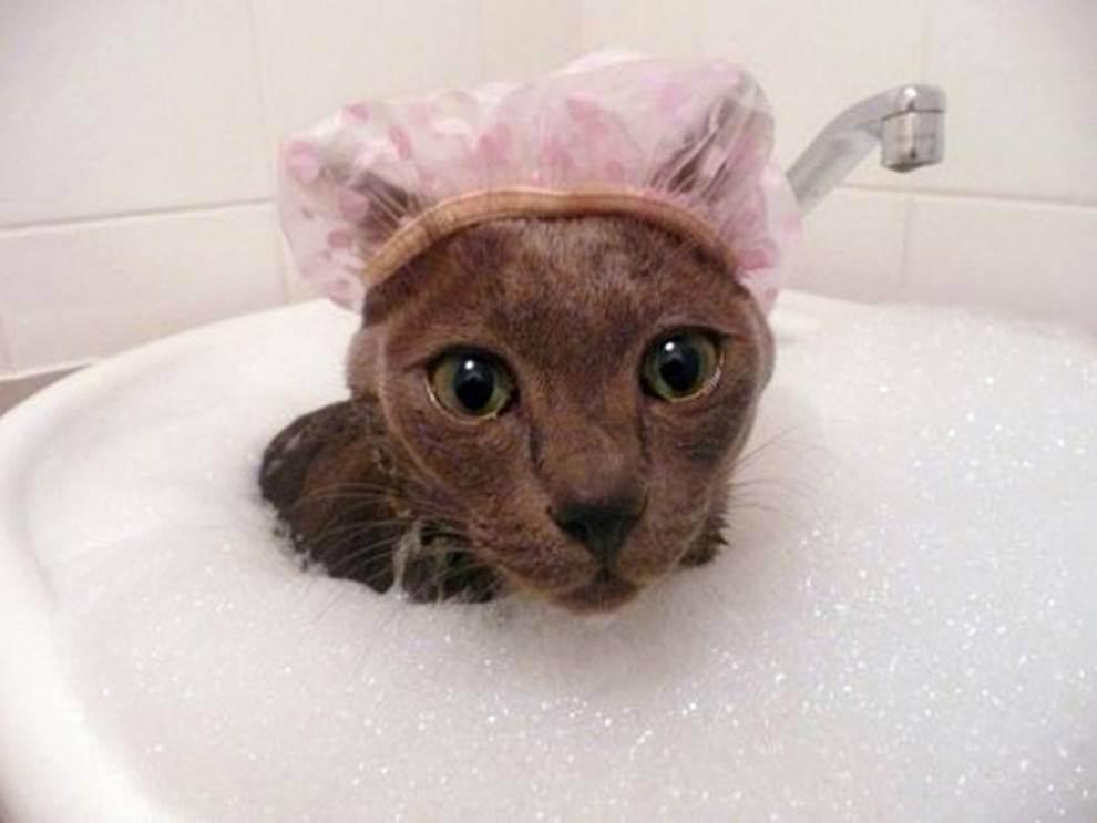 Правила и рекомендации, как купать кота