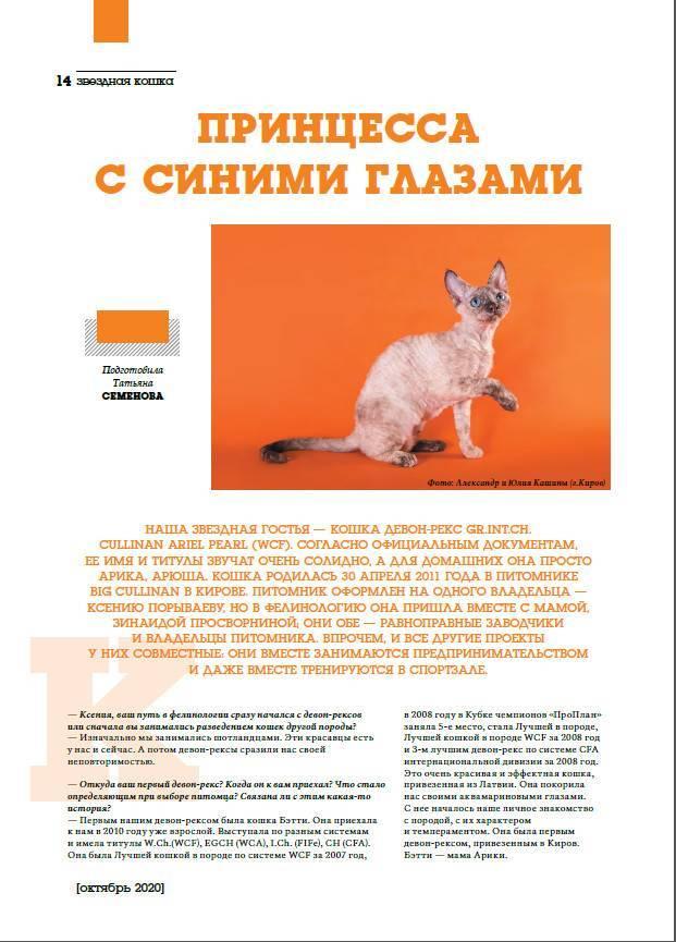 Как начать разводить кошек | выгодно ли, какие есть выгодные породы котов