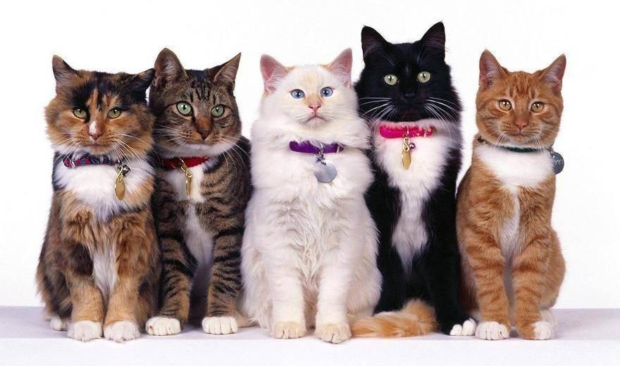 Козерог – кот (кролик)