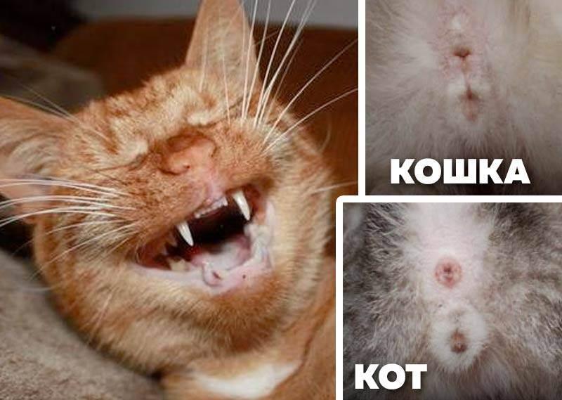 Как определить кот или кошка у новорожденных котят: фото