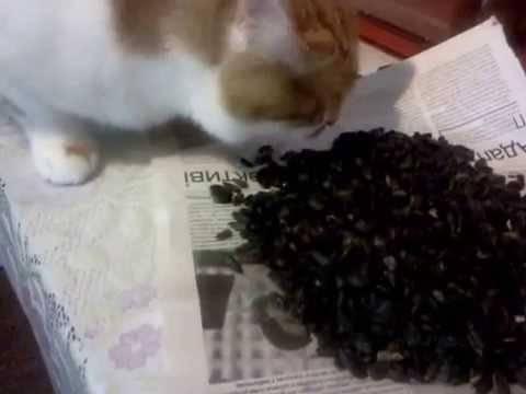 ✅ можно ли коту семечки подсолнуха - усадьбанатали.рф