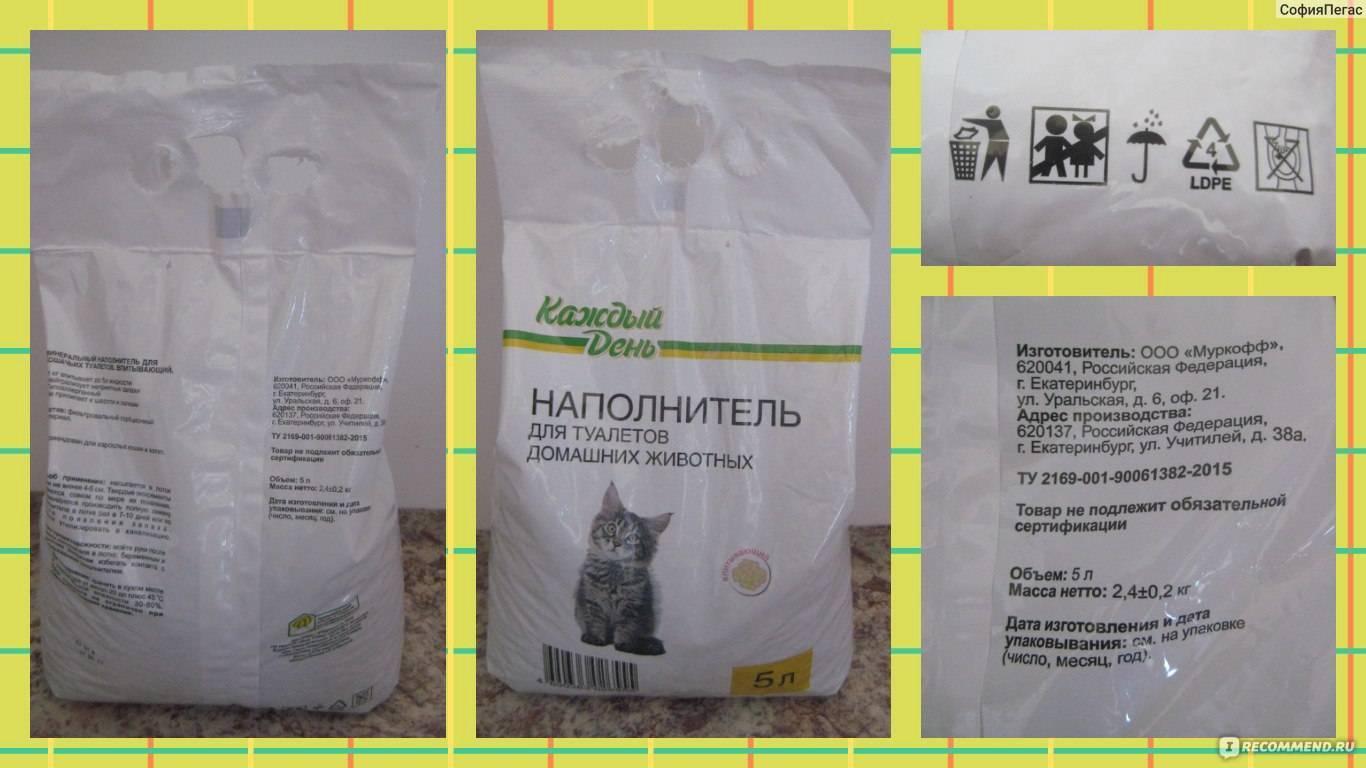 Котенок ест наполнитель для туалета: что делать и почему кошка так поступает?