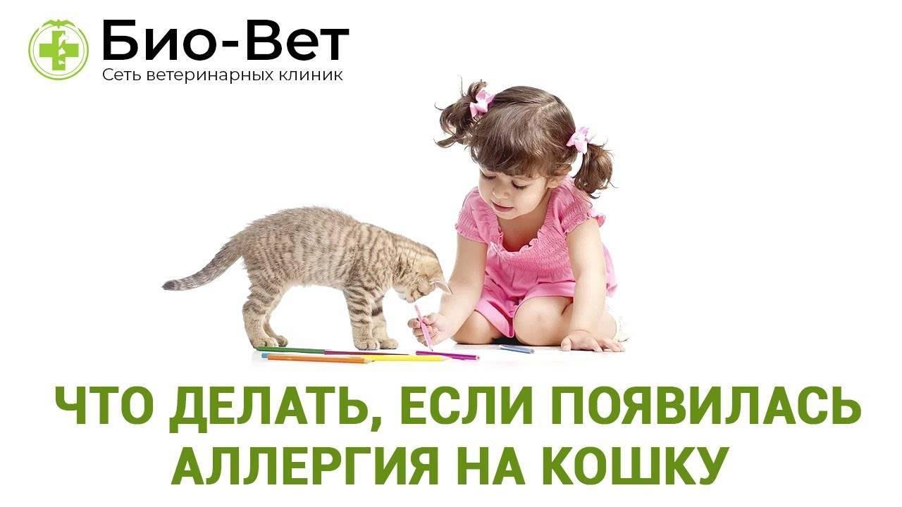 Аллергия на кошек — что делать и как избавиться