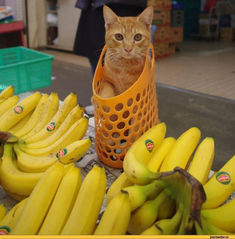 Яблоко кошкам: можно ли давать, польза и вред