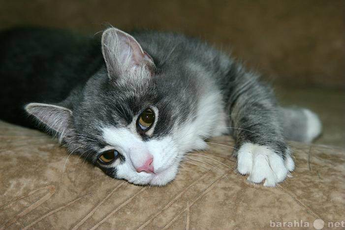 Безопасная передержка: как найти временный дом для кошки