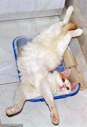 Сколько кошка может не ходить в туалет после операции