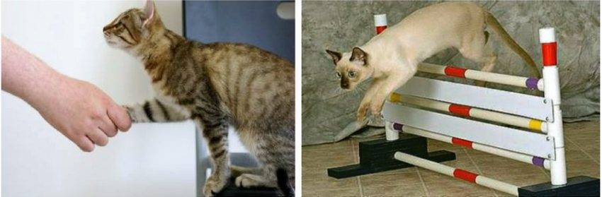 Как сделать котенка послушным, ласковым и спокойным: порядок воспитания