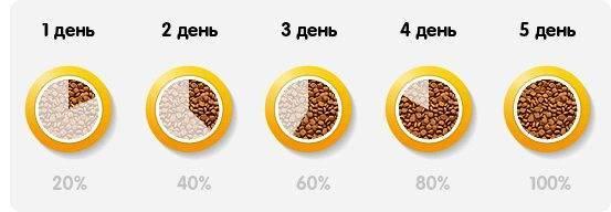 Причины, по которым коты перестают есть сухой корм