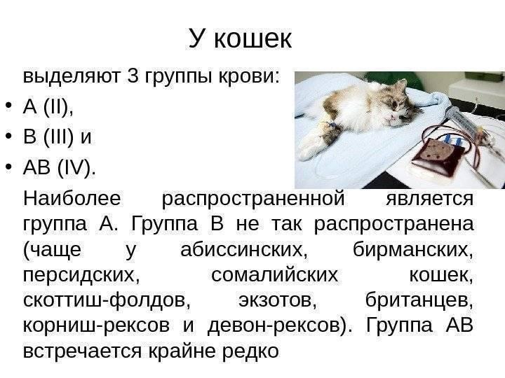 Гемотрансфузия у собак и кошек, требования к забору крови