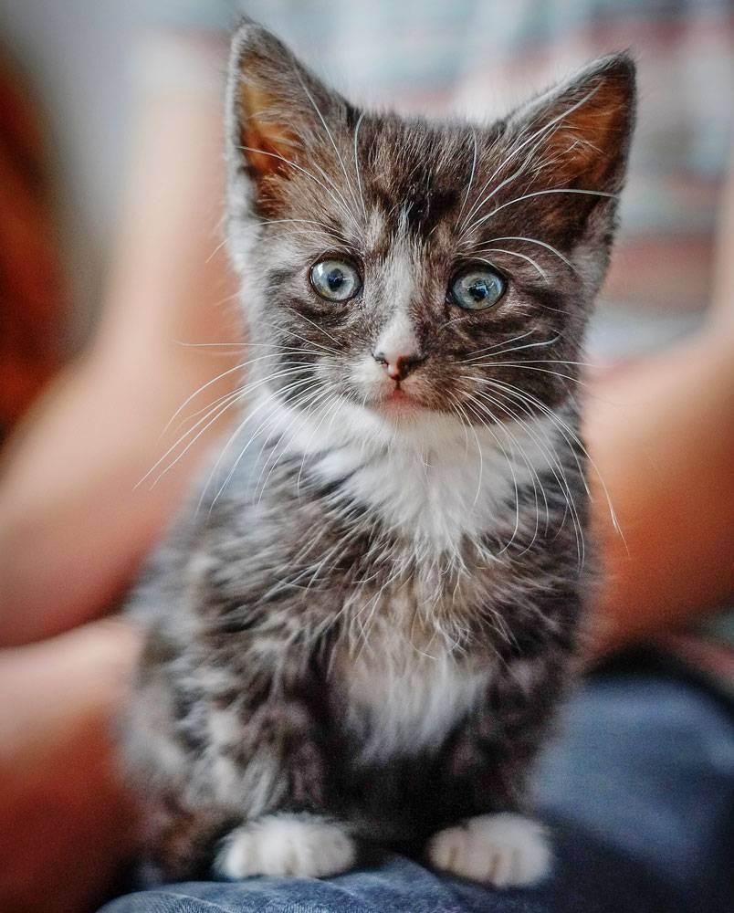 Миски для кота какие у вас?