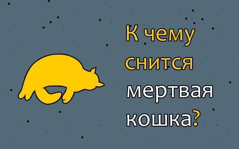 Человек кот
