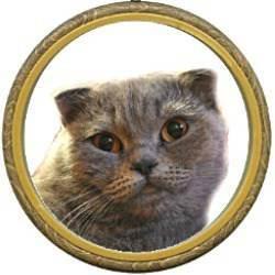 Котенок линяет - можно ли с этим бороться. шотландская кошка линяет: в чем причина и что делать