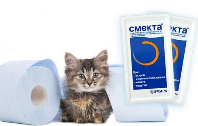 Смекта для кошек: как давать препарат коту или котенку при поносе, в какой дозировке?
