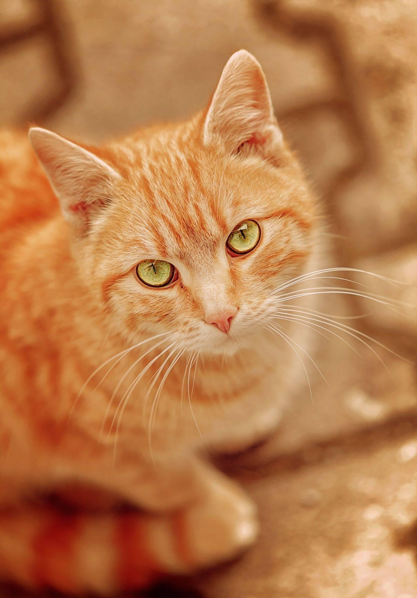 Кошки с зелеными глазами: список пород и особенности их характера