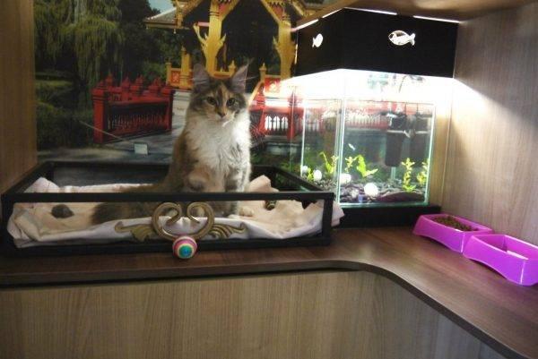 Требования для гостиницы для животных