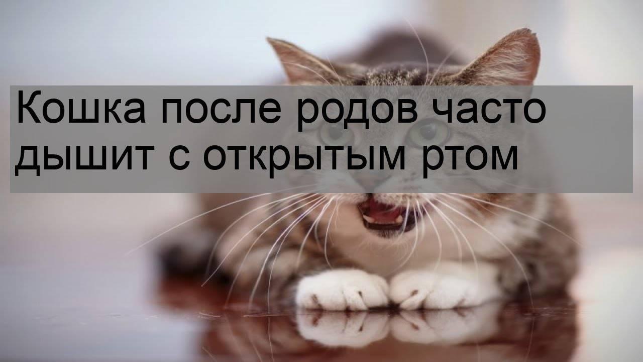 Почему котенок чихает 12 причин