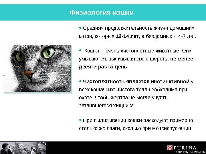 Сколько живут кошки: таблица средней продолжительности жизни разных пород